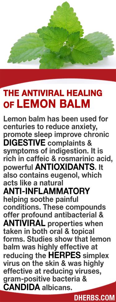 Topical lemon balm