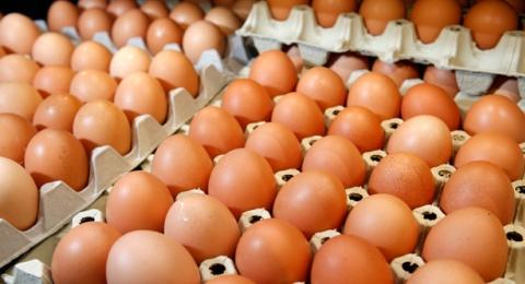 0-295516696-eggs
