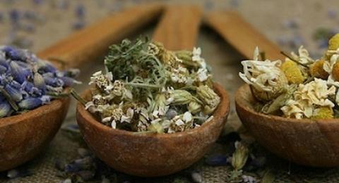 0-323398443-herbalremedies
