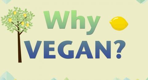0-539395405-why-vegan-image