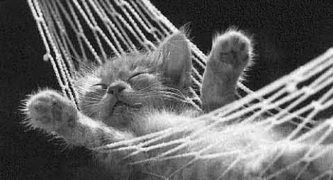 0-850425764-sleepingcat