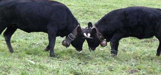 Meat industry ignores FDA, health experts, buys more antibiotics