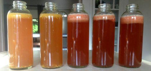 flavored-kombucha