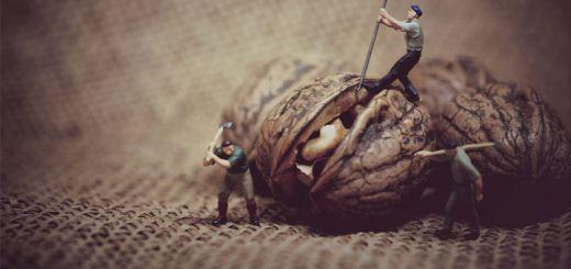 little-walnut-men