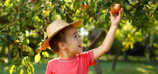 boy-picking-apple