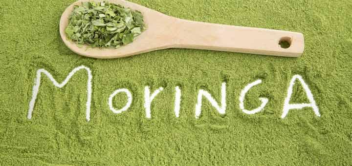 moringa-herb